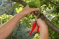 srv_pruning