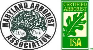 Certified Arborist - Tree Services